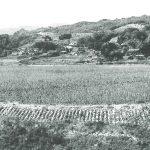 昭和末期の桑園